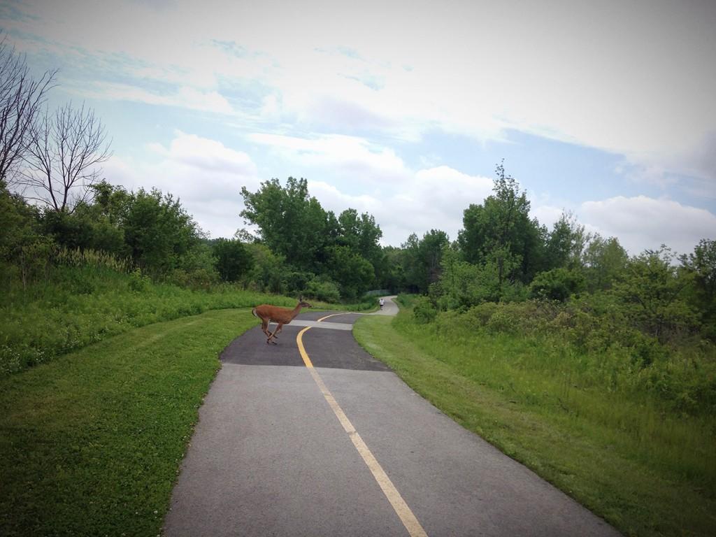 CalSag Bike Trail-Deer Crossing