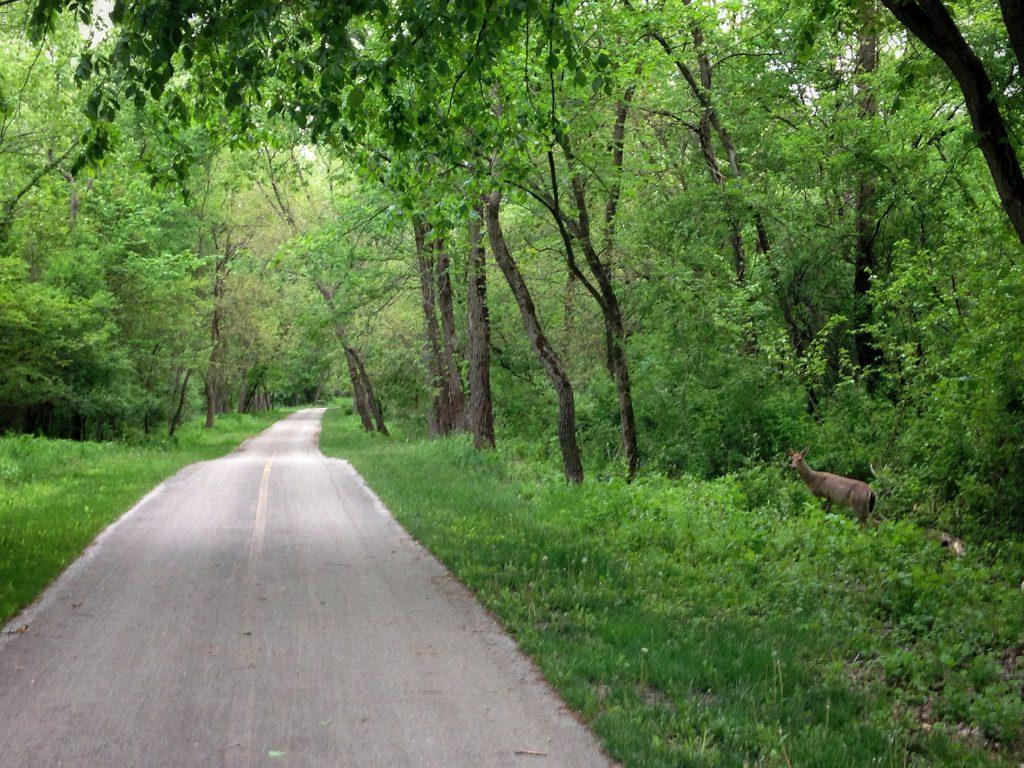 Centennial Bike Path Veteran's Memorial Bike Path Deer on the Path