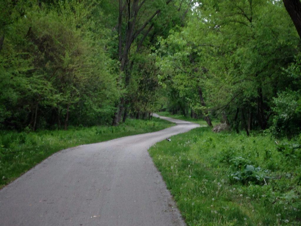 Centennial Bike Path Skunk in Lemont